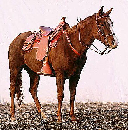 Как взнуздать и оседлать лошадь